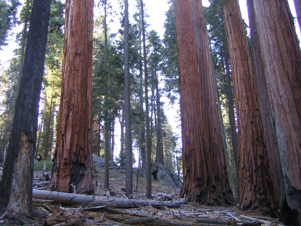 sequoia national park guys Sequoia national park california 293 likes 238 talking about this 1,477 were here sequoia national park , sequoia national forest , three rivers.